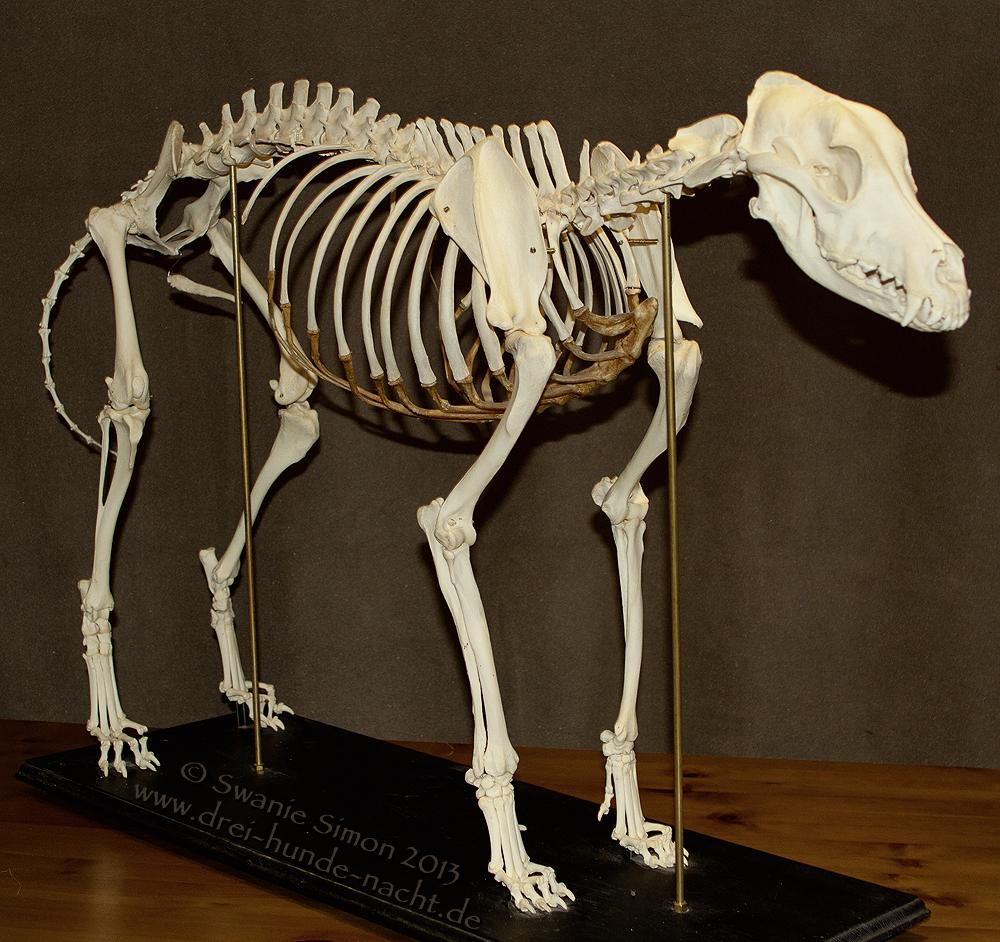Skelett – drei-hunde-nacht.de