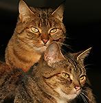 Puma & Idgie